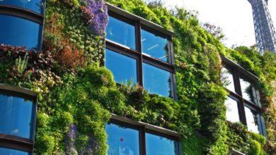 Photo of Дерева на дахах та овочеві грядки на терасах: фото і відео міста майбутнього