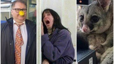 Photo of Найсмішніші меми тижня: ляпи українців у Давосі, віруси з AliExpress і пригоди посума-розбійника