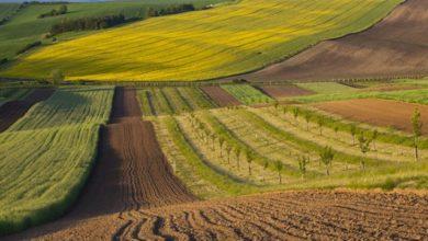 Photo of У кожного українця є конституційне право на отримання земельної ділянки – експерт