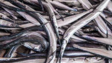 Photo of В Індонезії риба проштрикнула наскрізь шию 16-річному хлопцю (18+)