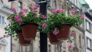 Photo of Навесні на опорах Ніжина встановлять вазони з квітами