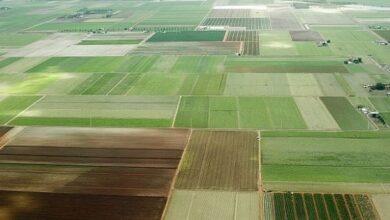 "Photo of ""СЕТАМ"" продало 72 тис. га заарештованої землі на 428,5 млн грн"