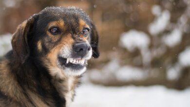 Photo of У Дніпрі собака напав на восьмирічну дитину