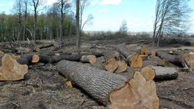 Photo of Як протидіяти незаконній вирубці лісів на Ніжинщині?