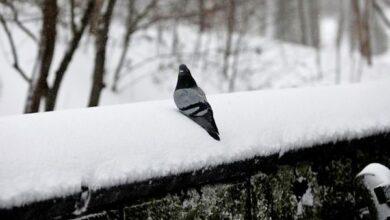 Photo of Де на Чернігівщині цієї зими випало найбільше снігу?