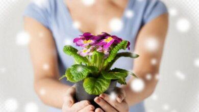 Photo of Ніжинці, долучайтесь до акції – подаруйте місту квіти!