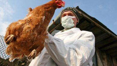 Photo of Кілька країн зняли з України обмеження на експорт м'яса птиці: список