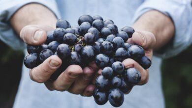 Photo of У мережу потрапили концепти нової лінійки вин Villa Krim