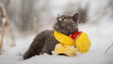 Photo of Погода на завтра: У західних областях України прогнозують сніг з дощем