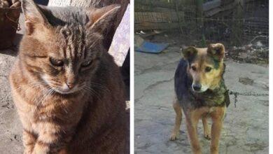 Photo of Тварини в розпачі: без годувальника і будинка