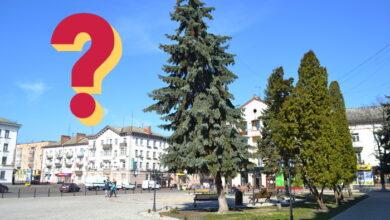 Photo of Чому падають дерева на площі у Ніжині?