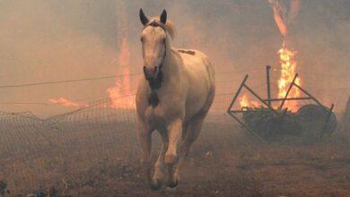 Photo of На Ніжинщині під час пожежі згорів кінь