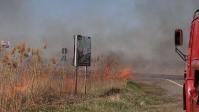 Photo of Тварини у небезпеці: на Одещині горить національний природний парк – фото