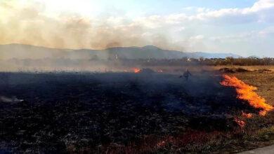 """Photo of Чоловік спалив 9 гектарів заповідника """"Долина нарцисів"""" на Закарпатті: що йому загрожує"""