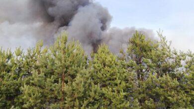 Photo of Через київського дачника згоріло більше 70 гектарів молодого лісу