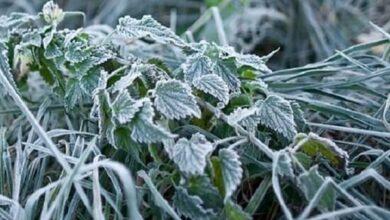 Photo of Холодний квітень: уночі на Чернігівщині очікуються заморозки