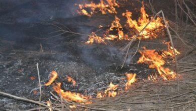"""Photo of У Чорнобильській зоні чоловік """"заради забави"""" спалив 5 га лісу"""