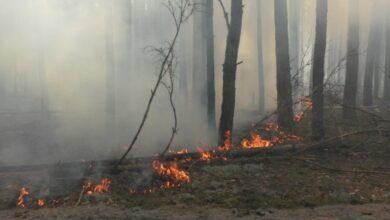 Photo of За самовільне спалювання рослинності уряд пропонує ввести штрафи від 850 грн до 17 тис грн