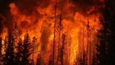 Photo of У деяких районах Київської обл. та Києві прогнозують забруднення повітря через пожежі у Чорнобильській зоні