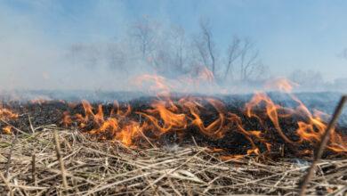 Photo of Зеленський хоче ввести кримінальну відповідальність за підпал сухої трави