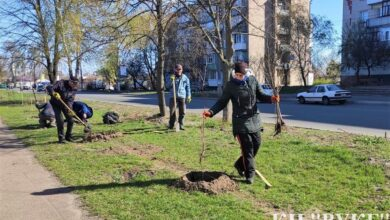 Photo of У Ніжині висадили майже 300 молодих дерев