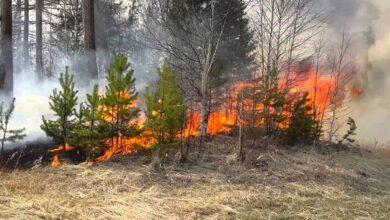 Photo of На Ніжинщині підпалили ліс?