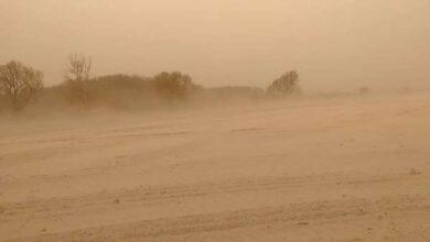 Photo of На Ніжинщині утворилася справжня пустеля. Фото
