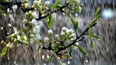 Photo of На Ніжинщину сунуть рясні дощі