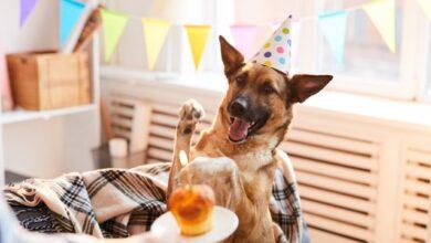 Photo of Вдома теж круто! Як відсвяткувати народження під час карантину