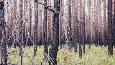 Photo of У Чорнобильській зоні гасять два вогнища лісової пожежі – ДСНС