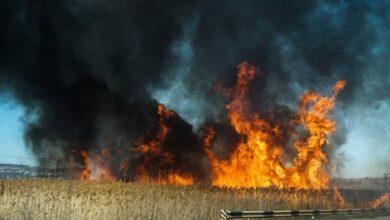 Photo of Кульбіда назвав причину великої кількості пожеж в Україні
