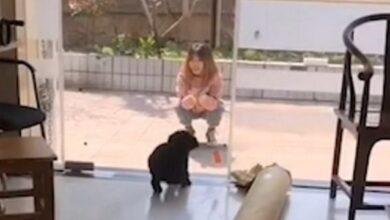 Photo of З 1 квітня, тварини: два собаки врізалися у скляні двері один за одним
