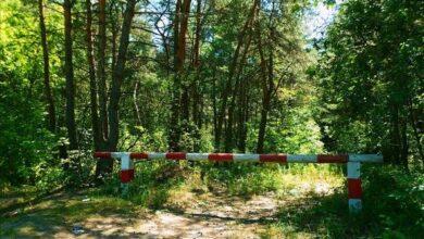 Photo of Чи закриють Гуньківський ліс для відвідування та відпочинку?