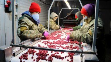 Photo of На Ніжинщині сезонним робітникам платять у половину більше, ніж за кордоном