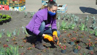 Photo of Як зупинити в Ніжині викрадання квітів, дерев та кущів?