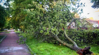 Photo of На центральній алеї у Ніжині звалило дерево