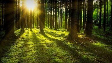 """Photo of Лісовий масив ДП """"Ніжинрайагролісництво"""" передадуть Ніжину?"""