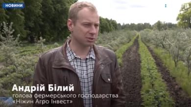 Photo of 1000 гривень на день за збір малини пропонує ніжинське підприємство. Відео