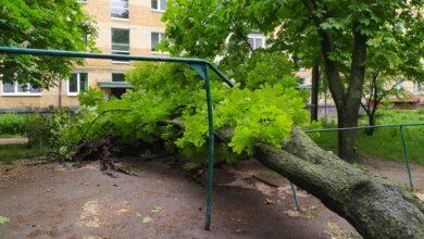 Photo of Негода вирвала на ніжинському подвір'ї одразу три дерева. Фото