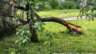 Photo of Дерева звалило ще й на вулиці Шевченка і у сквері Гоголя. Фото