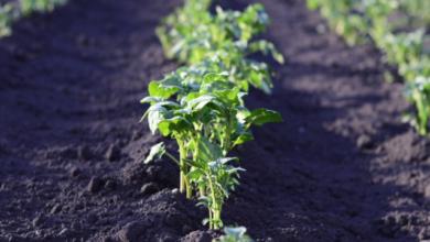 Photo of Посівний календар на червень 2020: коли і що можна робити на городі