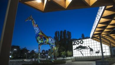 Photo of Київський зоопарк відкрився після першої за 50 років реконструкції – ціна квитків