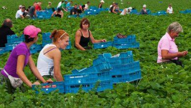 Photo of Німеччина продовжить дозвіл на в'їзд сезонних працівників – терміни