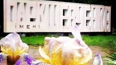 Photo of Центральний парк Ніжина: що з ним буде далі?