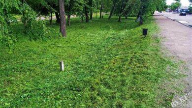 Photo of Як комунальники Ніжина борються з травою