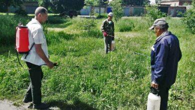 Photo of Комунальники Ніжина вже почали боротьбу з небезпечним бур'яном