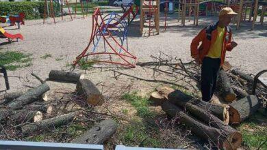 Photo of Верби, липи і ялини: у Ніжині заплановано видалити чимало дерев