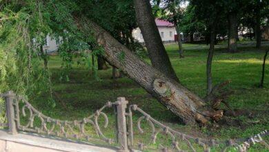 Photo of Вночі у сквері Гоголя звалило велике дерево. Фото