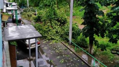 Photo of 57 повалених дерев і півторамісячна норма опадів за 15 хвилин: Дніпро накрила злива
