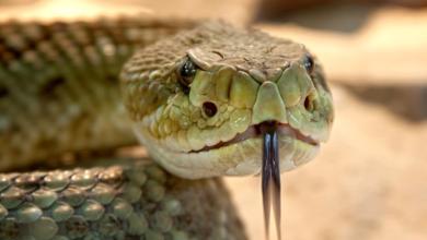 Photo of У Міністерстві освіти помітили смугасту змію